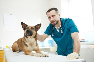 Doctor and sick dog